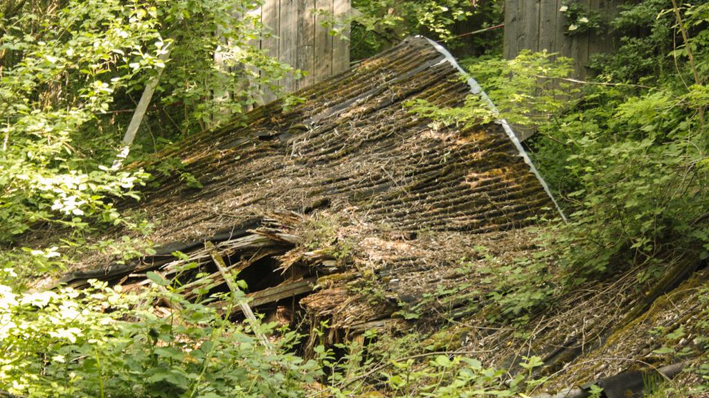 Fledermäuse Insheim