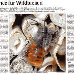BienABest - Veranstaltung Wildbienen