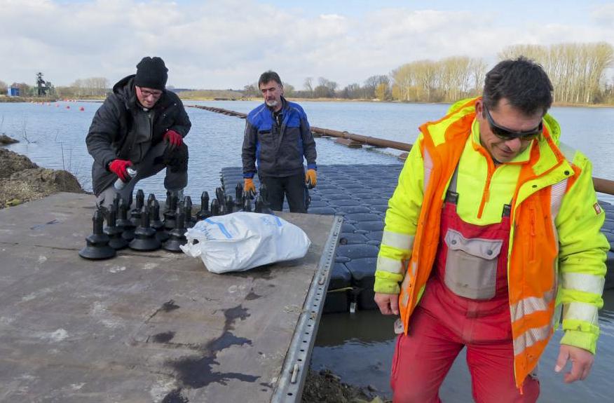 neue Flussseeschwalbeninsel
