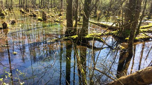 Amphibienzaun an der K19 westlich Hagenbach