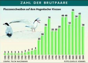 Grafik Flussseeschwalben