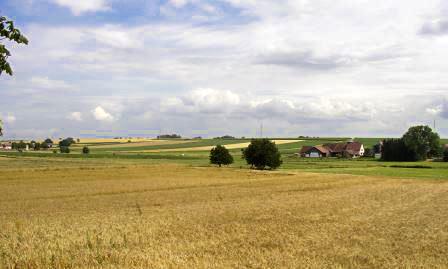 Steinkauz-Landschaft bei Kapellen-Drusweiler