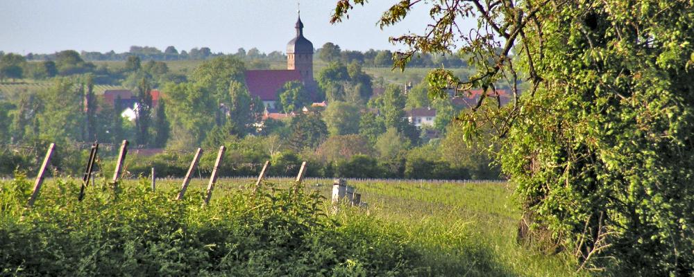 Rundwanderwege Billigheim-Ingenheim