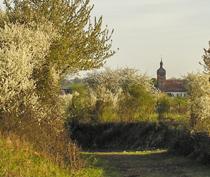 Wandern in Billigheim-Ingenheim